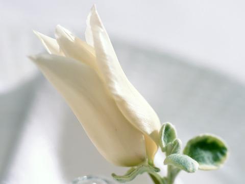 每个花朵都有春天